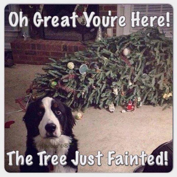 Christmas Meme 12