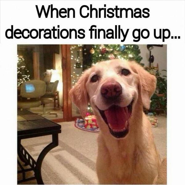 Christmas Meme 22